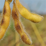 Szójában használható növényvédő szerek információs adatlapjai