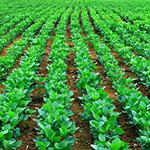 Közlemény a zöldítés keretében kijelölt ökológiai fókuszterületekre vonatkozó növényvédőszer-tilalomról