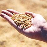 Növekvő étvágy az amerikai szója iránt: John Baize közgazdász a világkereslet hajtóerőiről